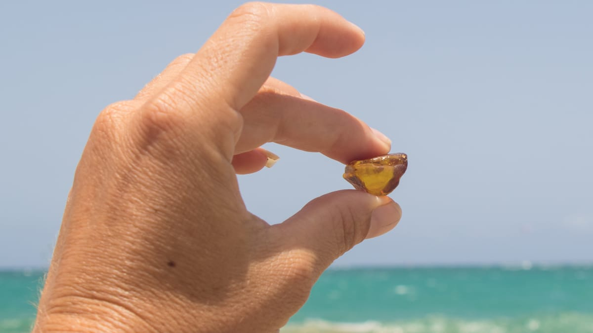 Amber Hunting Guide in the Dominican Republic